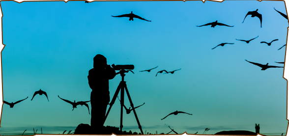 bird watching spots mumbai