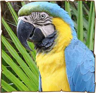 Our Heroes | EsselWorld Bird Park